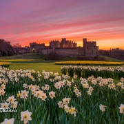 Alnwick Castle this Easter
