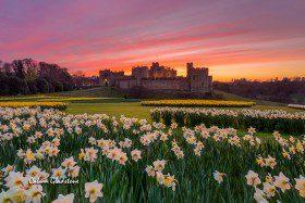 Alnwick Castle by Calum Gladstone